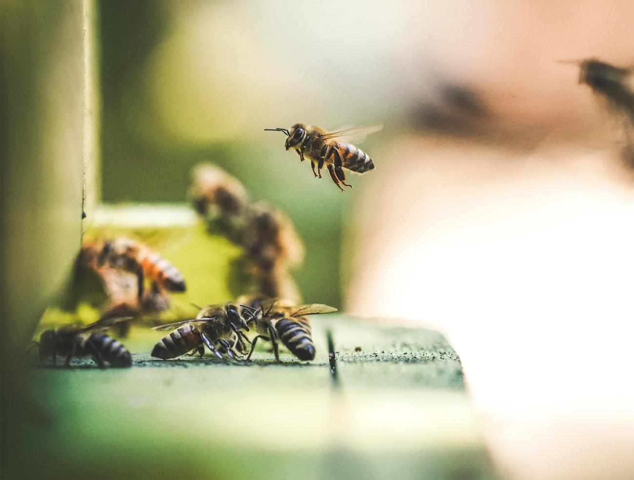 soin abeilles apiculteur oise