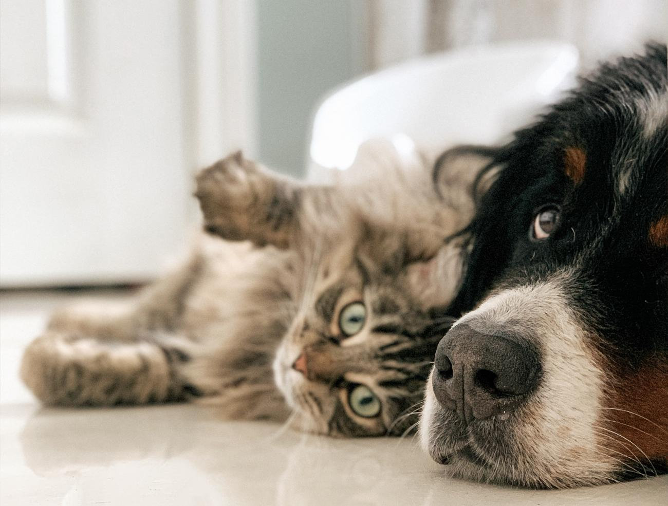 soin animaux chat chien oise